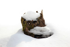Early Signs of Spring (Brian 104) Tags: winter shadow snow ice stump melt ilobsterit