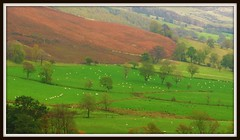 The Mites of Grazing grandeur (Dazzygidds) Tags: sheep derbyshire curves perspective pasture bracken nationaltrust slope darkpeak peakdistrictnationalpark moorland castleton winnatspass hopevalley peverilcastle greenpasture shortpoem spacingintrees dottedwithsheep