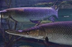 Bass Pro Shop - Springfield, Missouri (Adventurer Dustin Holmes) Tags: fish basspro bassproshops bassproshop bassproshopsoutdoorworld