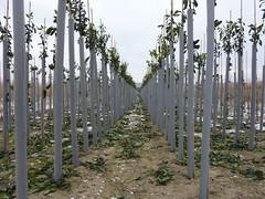 Boompjes omwikkeld tegen de kou (ellyko2010) Tags: dag februari winterse