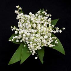Happy  April (nene-ane(ON - OFF)) Tags: worldsartgallery tagdeepavali