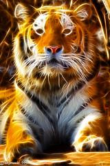 Sibirischer Tiger (Mladen Janjetovic) Tags: schnbrunn vienna wien animals zoo tiere sterreich tiger tiergarten 2012 mladen 2011 at sibirischer animalstiere 55250is flickrbigcats janjetovic eos550d