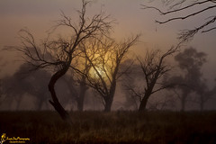 Is A Mystery To Me (southern_skies) Tags: trees sun fog australia nsw deadtrees jindabyne