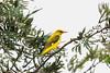 IMG_6846L4 (Sharad Medhavi) Tags: bird canonef100400mmf4556lisusm canoneod50d birdsandbeesoflakeshorehomes