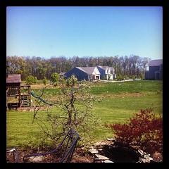 The Backyard Is Mowed