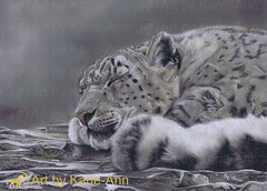 Open Edition hand embellished giclee fine art ACEO ATC signed print snow leopard wildlife cat animal print from Art by Karie-Ann (artbykarieann) Tags: pet art portraits wildlife