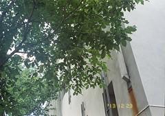 000018-4 (lumpsum) Tags: carlton superia melbourne fujipix