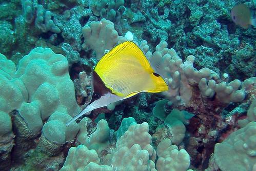 coral picker