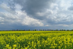simply - spring! (JoannaRB2009) Tags: flowers blue trees sky storm nature field weather yellow clouds landscape countryside spring view horizon poland polska sunny lodzkie dzkie