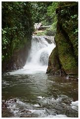 Nambillo Falls (Patrick J. Negwer) Tags: dog naturaleza verde green dogs nature water rio river waterfall ecuador agua perro perros cascadas mindo nambillo