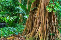 Singapore (Edi Bhler) Tags: plant tree grass pflanze gras baum baumstamm 28300mmf3556 nikond800