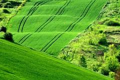 Green (luporosso) Tags: italy naturaleza verde green nature countryside nikon italia country natura campagna erba marche scorcio campi naturalmente scorci allaperto nikond300s distesaerbosa