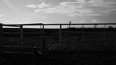 Bark at the horizon (giulian.frisoni) Tags: sunset blackandwhite dog sunlight chihuahua black blancoynegro contrast landscape mexico monocrome monocromatico carichic