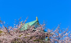 Osaka Castle (Never House) Tags: osaka jo    canon 55250mm  landscape cherry sakura raulwong jpn japan