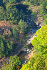 Silent Valley National Park, Palakkad, Kerala (dotcompals) Tags: nationalpark kerala palakkad silentvalley