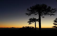 Amanecer en Nahuelbuta (Mono Andes) Tags: chile night clear amanecer andes araucaria cordilleradelacosta parquenacional regióndelaaraucanía regióndelbiobío sierravelluda volcánantuco parquenacionalnahuelbuta cordilleradenahuelbuta