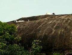 P1160732 (KanCanDo) Tags: statue temple ancient buddha paintings buddhism srilanka goldentemple dambulla cavetemple cavepaintings ancientstatues rangiridambulla ancientpaintings