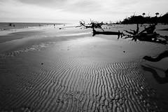 Boneyard Beach (Seth Berry Photography) Tags: ocean blue trees sky bw white beach sc nature yard dead island bay photographer southcarolina bulls charleston driftwood bone boneyard bullsisland caperomain sethberryphotography