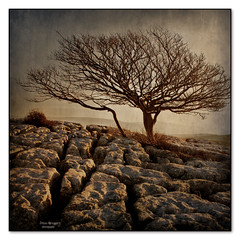rocky road (seve) Tags: uk trees england apple photoshop canon landscape eos 350d mac aperture scenery flickr imac osx steve hills elements cumbria canon350d vista macosx gregory ios textured topaz knott appleaperture farleton appleimac stevegregory 180550mm borderfx magicunicornverybest ringexcellence applecrypt httpwwwflickrcomphotosapplecrypt httpapplecryptblogspotcom httpapplecrypttumblrcom