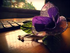 boutineer (felix afonso) Tags: sun set evening purple guitar strings corsage boutineer