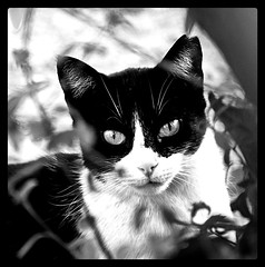 Cat (wsrmatre) Tags: bw monochrome animal cat monocromo gate bn felino ericlpezcontini ericlopezcontini ericlopezcontinifoto ericlopezcontiniphoto ericlopezcontiniphotography wsrmatrephotography wsrmatre