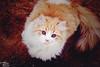 i see you (Tariq AL-oraini) Tags: pink cats baby girl cat canon search nikon looking who portait 1855 moonface whitecat whoareyou بنت 600d 85mm18 طفل قطه قط كانون جميله طارق المصور قطوه قطو طفله المبدع البحث بورتريت يبحث canon600d ماجده تصويراحترافي ض1 العريني ماجدهالرومي كانون600دي قطابيض ابحثعنك منانت؟ amaing50mm18 ورتريه