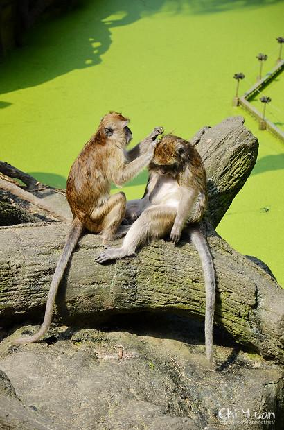 木柵動物園09.jpg