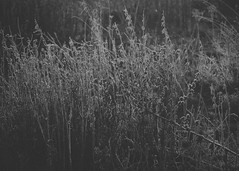 4/52 (skidu) Tags: morning light bw white black nature landscape is hipster tones f4 2012 week4 f456 550d tumblr efs55250mm 522012 52weeksthe2012edition weekofjanuary22