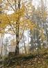 20111023_28143b (Fantasyfan.) Tags: kannelmäki finland helsinki autumn nature fog fantasyfanin topv111 siirretty