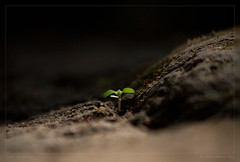 Life On Earth (Rhivu_Ray) Tags: life plant art nature beauty closeup canon eos leaf asia december peace earth 7d planet canoneos bengal bangla greenplant planttrees 2011 lifeonearth savelife greenlife kharagpur bestofnature saveearth savetree canoneos7d canonefs55250mmf456is canon7d canonefs55250f456is paschimbanga paschimbangla saveplant rhivu rhivuray rhitamvarray rhivuphotography rhitamvar rhivuart planttreessavelife