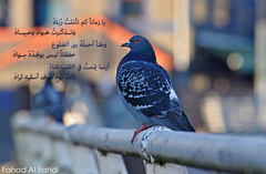 (Fahad S. Al Fahdi) Tags: fahad      alfahdi