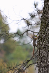 Honey Don't Forget the Milk... (SergeK ) Tags: usa brown tree green apple milk squirrel funny vermont bokeh dont honey nut vt forget serge pomme ecureuil pommel