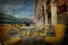 La Piazza di San Marco in the Morning (Swissrock) Tags: venice italy texture photoshop table chair nikon italia february taube venedig hdr sanmarco piazzadisanmarco 2012 februar lightroom markusplatz photomatix tonemapping d700 1424mm