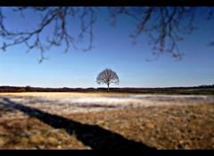 ... (Arkadious) Tags: las trees tree nature field germany landscape fields hesse przyroda drzewo drzewa krajobraz niemcy flickraward hesja