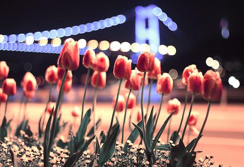 (emre e) road street bridge flowers light red sea flower night turkey 50mm tulips bokeh istanbul tulip fsm bosphorus 50mmf14 fatihsultanmehmet rumelihisar 60d ikincikpr