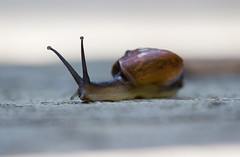 Slowpoke (Jim Boud) Tags: travel asia dof slow snail depthoffield malaysia kualalumpur shallow kl crawl birdpark asiapacific canon70200 canon60d jimboud canon70200mmf40lusm