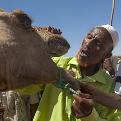 Camel market in Metehara in Karrayyu tribe - Ethiopia (Eric Lafforgue) Tags: africa market teeth culture tribal camel tribes tradition ethiopia tribe ethnic tribo ethnology tribu thiopien etiopia ethiopie etiopa oromo 9327  etiopija borana ethnie ethiopi  etiopien etipia  etiyopya          kereyu karrayyu metehara karrayu kararyu
