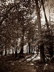 IMG_4240(2) (JaredManeggio) Tags: trees nature forest dark landscape photography woods image picture photographers professionalphotographer fineartphotography naturephotography artphotography photographyprints finephotography colorfulphotography fineartphotographyprints fineartphotographygallery photographyfineart fineartphotographyforsale fineartphotographygalleries colorsaturationphotography