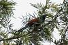 IMG_6965L4 (Sharad Medhavi) Tags: bird canonef100400mmf4556lisusm canoneod50d birdsandbeesoflakeshorehomes
