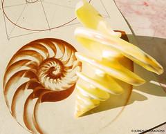 "N179*""NATURE AND GEOMETRY( RECOGNITION OF LEONARDO DA VINCI.1542-1519 ) MARINE SNAIL,N1 (Jordi Camardons Caralt) Tags: stilllife nature geometry visualart conchas"