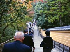 The Quite Road (JRN*) Tags: autumn portrait fall 120 film nature leaves japan 645 kyoto shrine asia alone kodak lostintranslation 金閣寺 kinkakuji contax645 2011 zeissplanart80mmf2