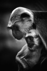 Mother & Child (chmeermann) Tags: portrait bw animal zoo monkey blackwhite child zoom mother portrt kind sw schwarzweiss mutter gelsenkirchen tier affe erlebniswelt