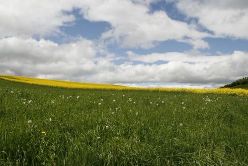 Jaune prairie et nuages d'azur.