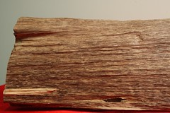 Item D (goldenfield) Tags: goldenfield gfe agarwood aquilaria goldenfieldholdings
