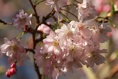 (marymac28) Tags: canon norfolk flowersplants myfuji canon100d