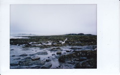 Gull (pdejordy) Tags: ocean seaweed film beach rocks seagull instax instantfilm instaxmini fujifilminstax