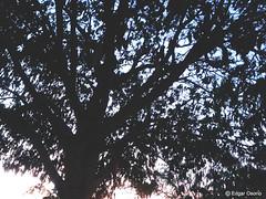 DSC_0277 (edgarosor) Tags: park christmas street new old city bridge family pink flowers blue trees winter sunset red sea summer portrait sky people bw music food orange dog baby sun white house lake snow seascape flower macro tree green bird art beach me nature water fleur car yellow azul night clouds cat river garden landscape pretty waves noiretblanc paysage telefono camara mothersday hild linght macromondays wheniwasac