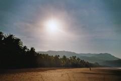 untitled. (rwed) Tags: ocean travel parque sun film beach latinamerica nature water analog trekking photography costarica pacific outdoor playa hike jungle palmtree backpack t5 nacional yashica ballena centralamerica mochilero
