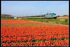 NMBS-2835+9211_Ssh_06052016 (Dennis Koster) Tags: bollen trein traxx warmond 2835 nmbs br186 personentrein passagierstrein 9211bruszasd