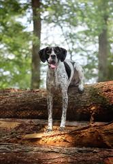 Frieda (dinahlorraine) Tags: dog pet forest log hund wald haustier baumstamm
